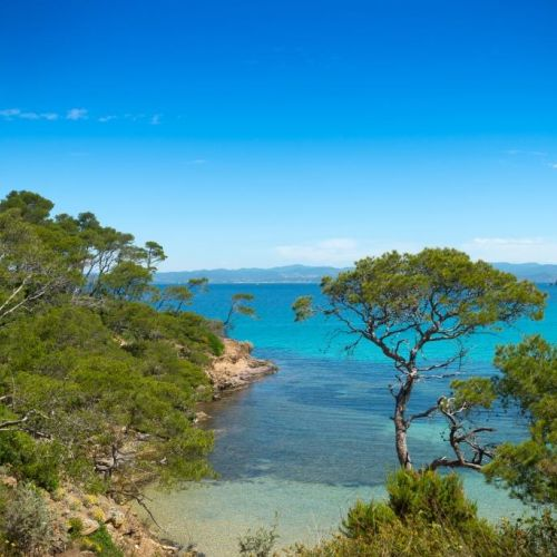 A wild cove with clear waters and pine trees on the island of Porquerolles in the south of France