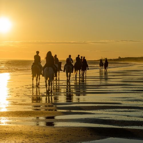 Riders on the beach on a horseback tour at sunset