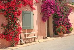 A facade of a house covered with a superb bougainvillea in bloom on the island of Porquerolles