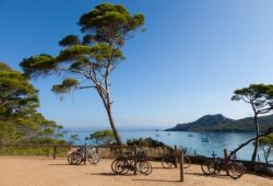 Rental bikes placed against a pine tree on the island of Porquerolles, an activity not to be missed during your yacht charter