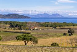 The vineyards of the Gulf of St Tropez that produce some of the best Provence rosé wines