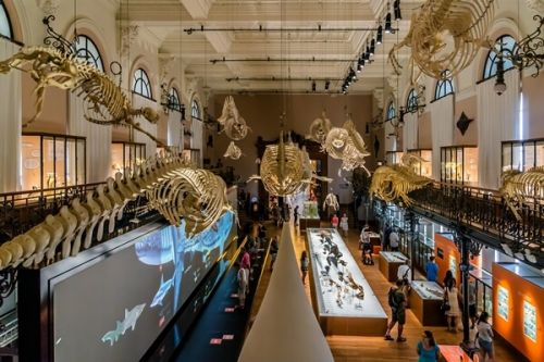 The Whale Room with its skeletons in the Oceanographic Museum of Monaco
